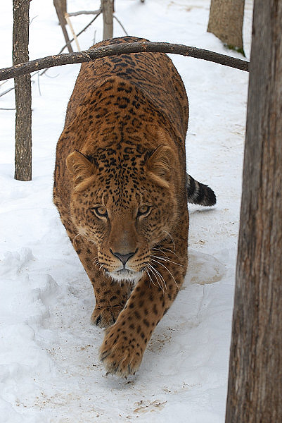 http://www.tarafrost.com/images/bcews_20080223/bcews_20080223_05.jpg